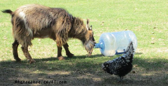 Pallet Goat Playground