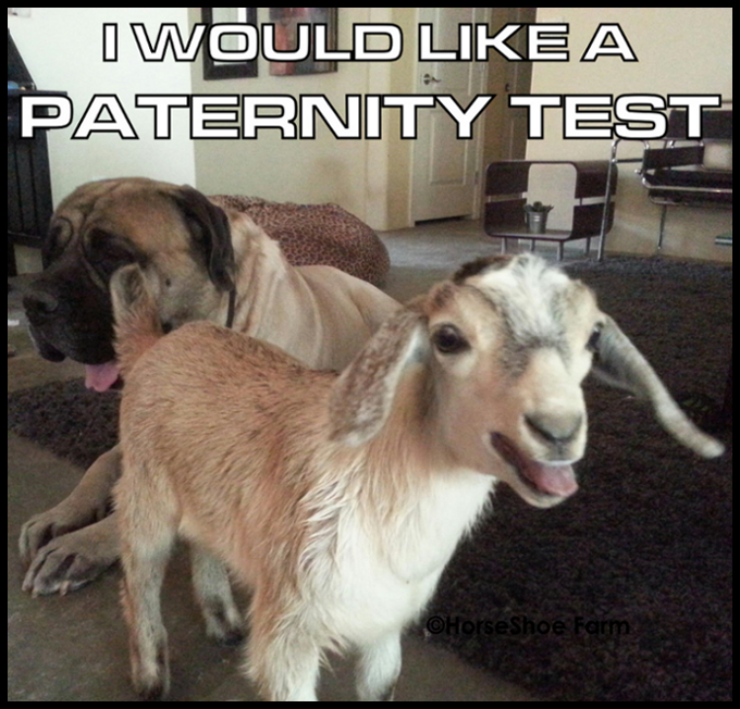 i'd like a paternity test